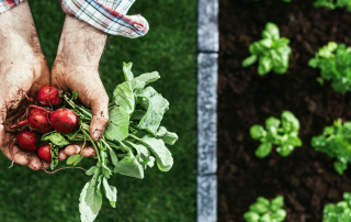 Organic farming continues to grow unstoppable